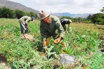 Presentan en Villa Clara multimedia sobre agricultura sostenible