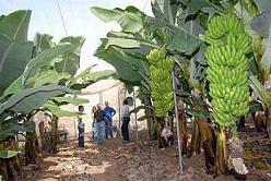 Empleo del policultivo incrementa producciones de frutales